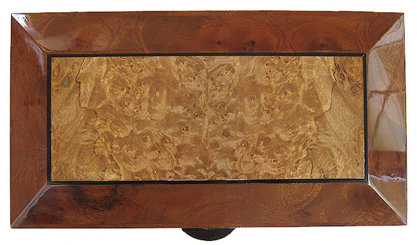 Maple burl framed in camphor burl box top - Handcrafted decorative wood keepsake box