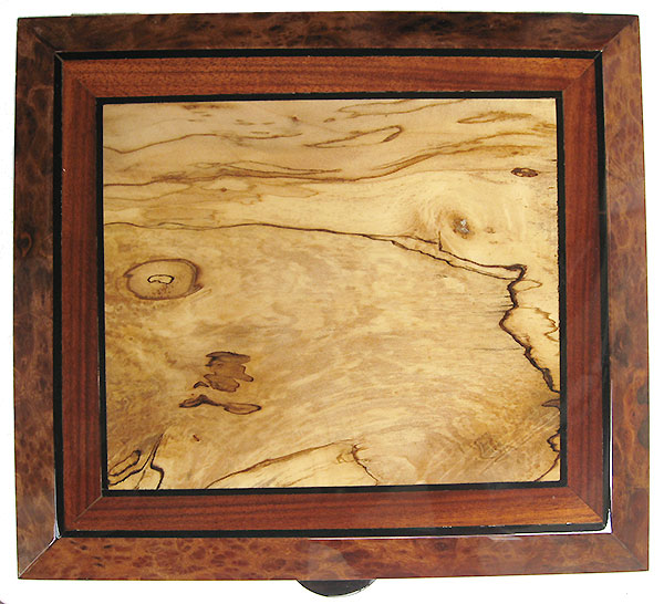 Handcrafted wood box top - Spalted maple framed in Indian rosewood and camphor burl with ebony stripings
